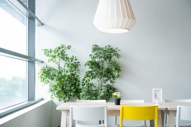 Umístění pokojové rostliny na světlém místě v pokoji