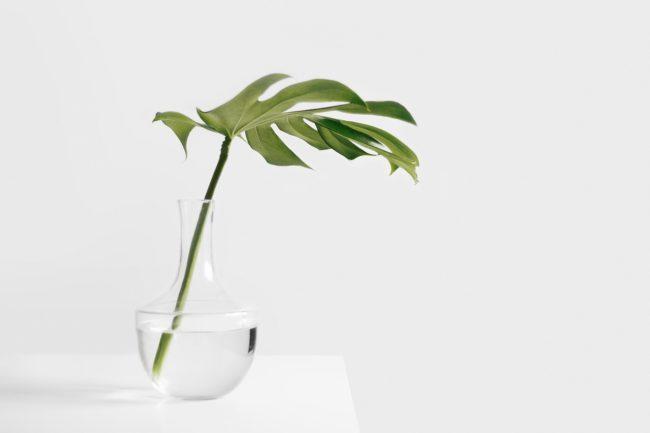 Pokojová rostlina ve skleněné váze plné vody